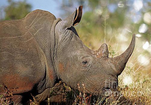 Rhino, wildlife in Africa by Wibke W
