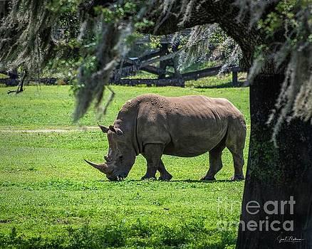 Rhinoceros by Jan Mulherin
