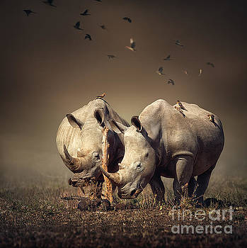 Rhino's with birds by Johan Swanepoel