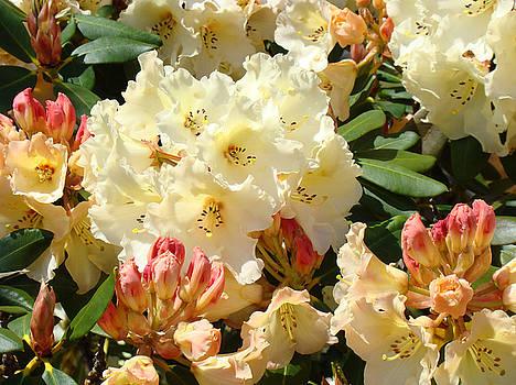 Baslee Troutman - RHODIES Creamy Yellow Orange 3 Rhododendrums Gardens Art Baslee Troutman