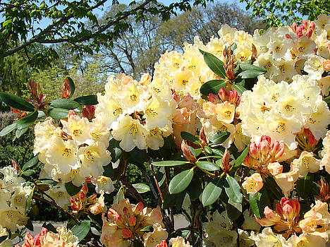 Baslee Troutman - RHODIES FLOWERS Art Yellow Orange Rhododendrons Garden