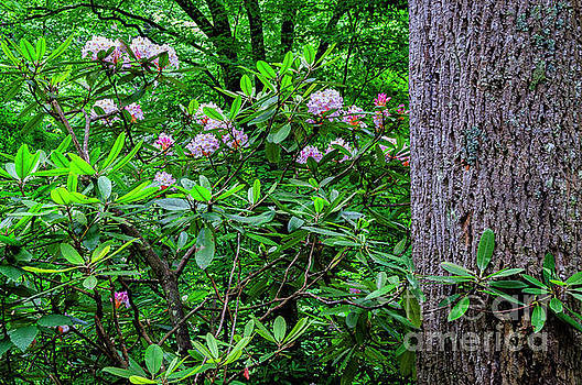Rhododendron and Poplar Trunk by Thomas R Fletcher