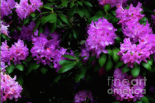 Dan Friend - Rhododendron flower paintography