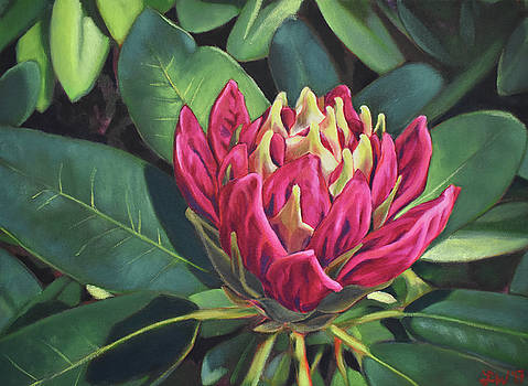 Rhododendron Opening by Lauren Waterworth