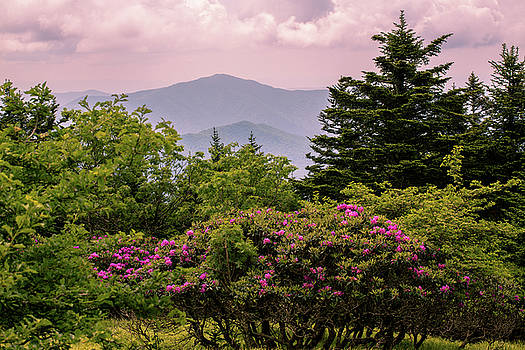Rhododendrons and Smoky Mountains by Carol Mellema