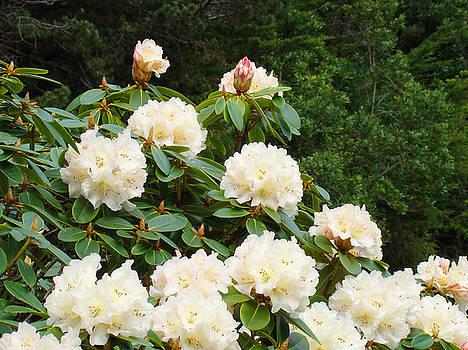 Baslee Troutman - Rhododendrons Floral Landscape Art Prints Baslee Troutman