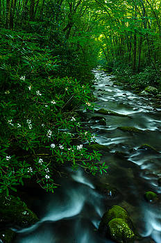 Rhododendrons On The Oconaluftee River  by Eric Albright