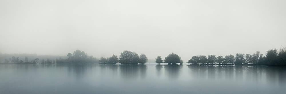 Rhythm of trees by Rob Visser
