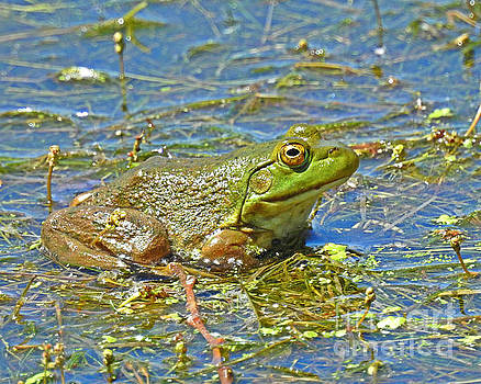 Ribbit by Kathy M Krause