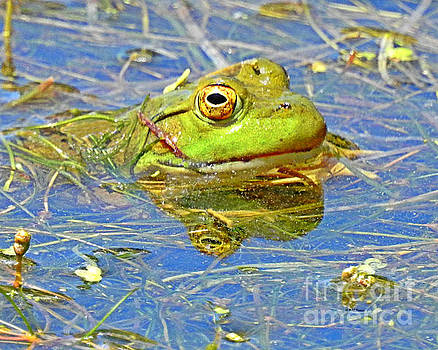 Ribbit... Ribbit by Kathy M Krause