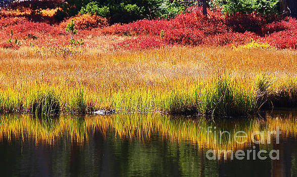 Ribbons of Fall by Marty Fancy