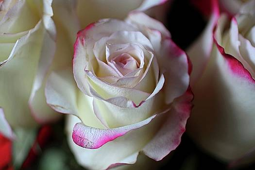 Ribbons of Rose II by Michiale Schneider