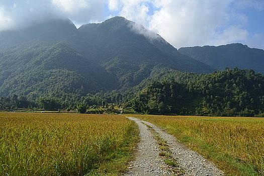 Rice field  by Atul Daimari