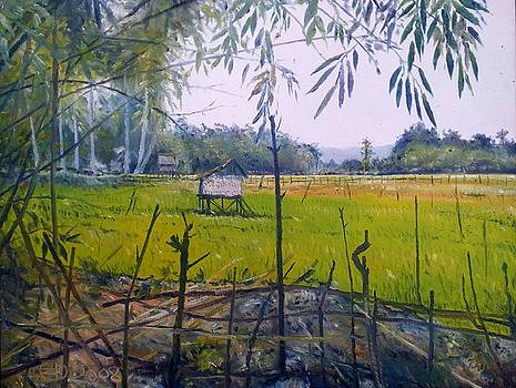 Rice Fields at Bumi Agung Lampung Sumatra Indonesia 2008  by Enver Larney
