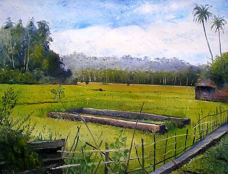 Rice fields at Laaiy Krui Lampung Sumatra Indonesia 2008  by Enver Larney