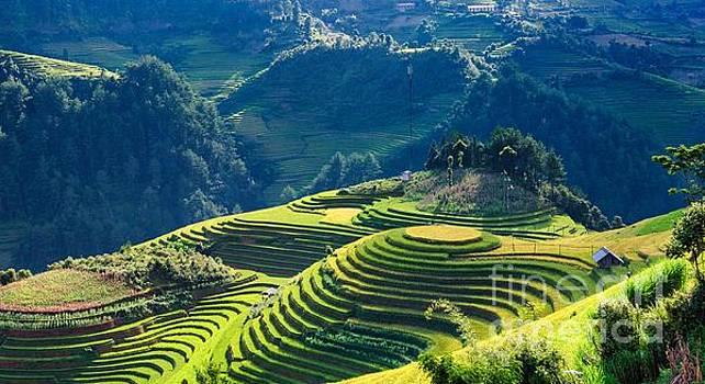 Rice Fields on Mountains _enhanced by Tin Tran