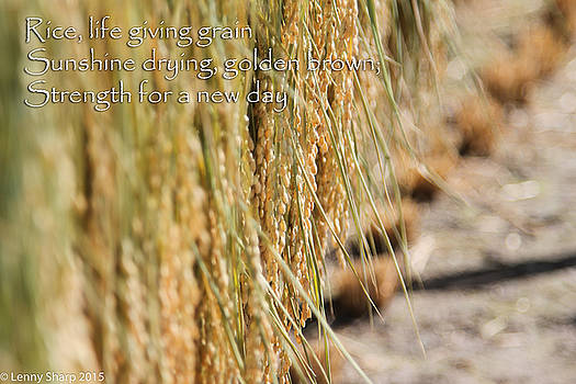 Leonard Sharp - Rice Harvest - Haiku