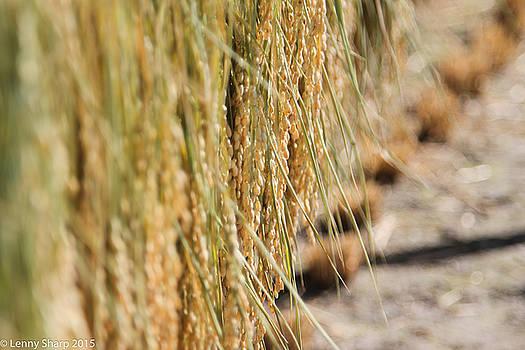 Leonard Sharp - Rice Harvest