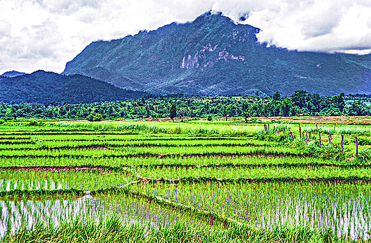 Steve Harrington - Rice Paddies and Mountains