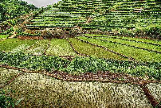 Rice Paddy Field wirh terraces in China by Donna Caplinger