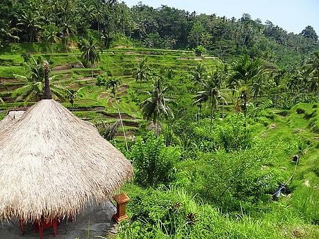 Rice Terraces by Exploramum Exploramum