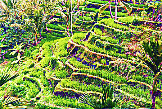 Rice Terraces Of Bali by Jerome Stumphauzer