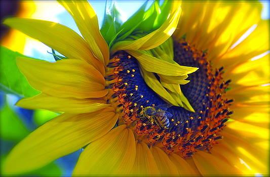 Gwyn Newcombe - Rich in Pollen