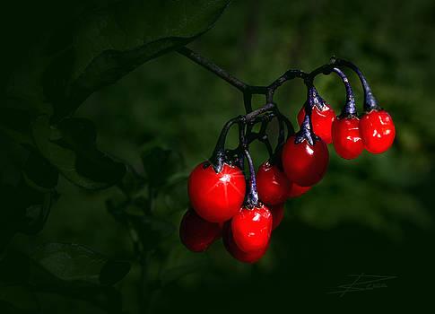 Barbara  White - Rich Ripe Red