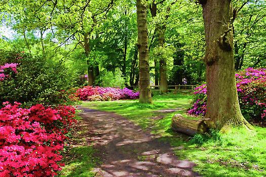 Richmond Park Azaleas by Judi Saunders
