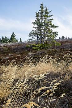 Ridge in Early Spring by Tim Newton