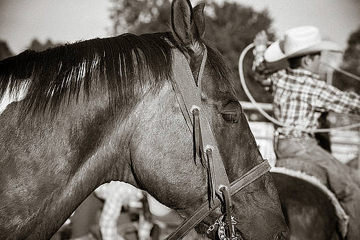 Riding and Roping by Steven Bateson