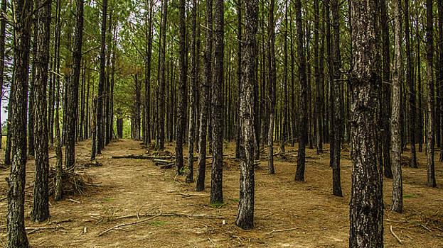 Paula Porterfield-Izzo - Planted Trees