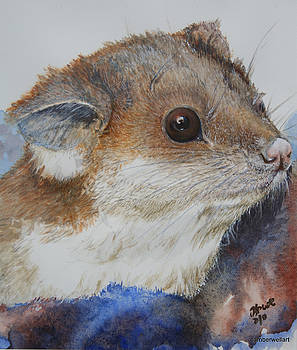 Ringtail Possum in the arms of safety by Jan Lowe