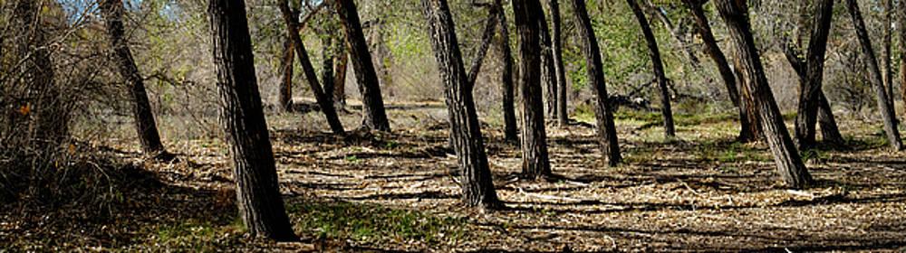 Rio Grande Bosque near Bernalillo New Mexico by Mary Lee Dereske