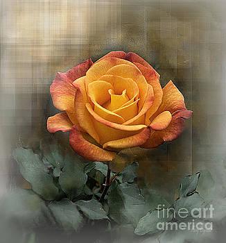 Rio Samba Rose by Karry Degruise