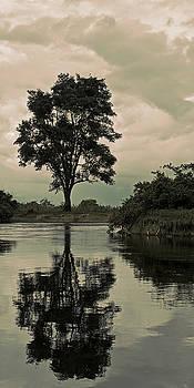 Rio Yacuma Reflections by Ron Dubin