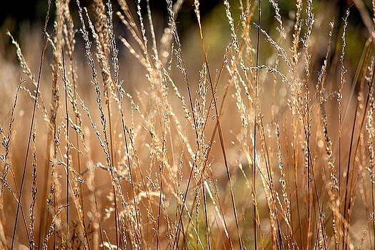 Rosanne Jordan - Ripe Autumn Grasses