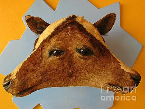 John Malone - Ripleys Cow Head