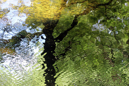 Ripples In Green by Carolyn Stagger Cokley