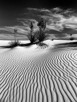 Bonnie Davidson - Ripples in the Sand in Black and White