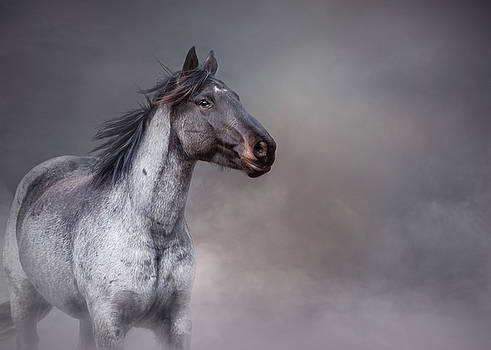 Rising From the Mist by Debby Herold