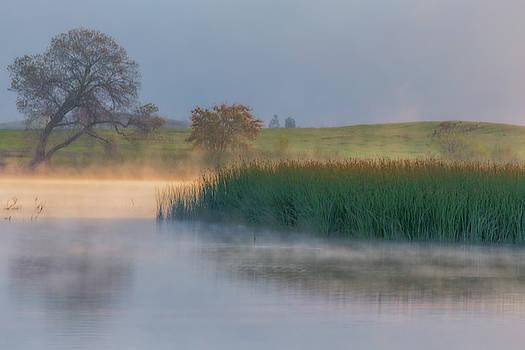 Marc Crumpler - Rising Mist