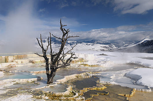 Reimar Gaertner - Rising steam and dead tree and at travertine pools with snow at