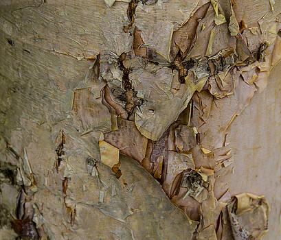 Allen Nice-Webb - River Birch Bark