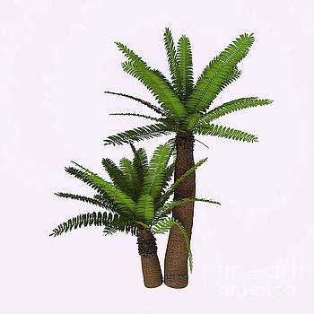 Corey Ford - River Cycad Plants