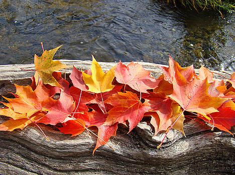 Baslee Troutman - River Log Driftwood art prints Colorful Fall Leaves