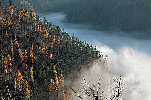 River of Mist by David Emond