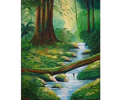 River on te rain forest by Jean Pierre Bergoeing