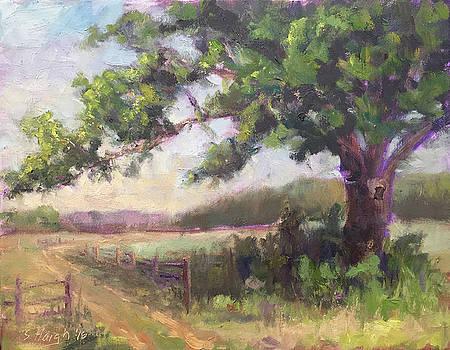 River Road Tree by Steve Haigh