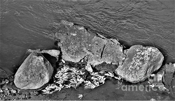 River Rock Autumn              Black and White             Indiana by Rory Cubel